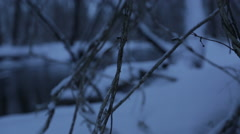 Pan across snow covered branches in the woods with natural sound Stock Footage