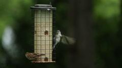 Birds eat from a bird feeder Stock Footage