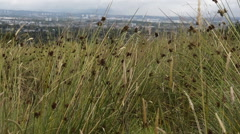 Tall grass in Paisley, Scotland Stock Footage