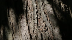 Close up of tree bark with foliage silhouettes, 1080p high definition Stock Footage