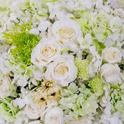 White flowers background texture. Stock Photos