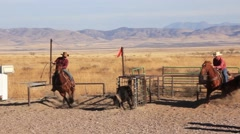 Two cowboys on horseback roping a calf Stock Footage