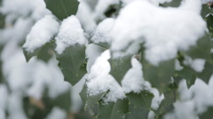 Snow sits on leaves of a holly tree Stock Footage