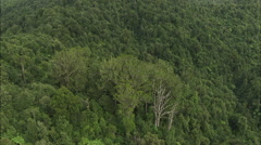 Stock Video Footage of Aerial view of mountain tree