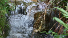 Forest stream in summer day Stock Footage