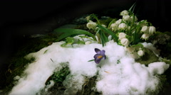 Melt snow with snowdrops, time lapse, 4k - stock footage