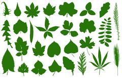 Set of different leaves - stock illustration