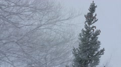 Trees blowing in a major winter blizzard Stock Footage