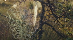 Stock Video Footage of Cobweb with morning dew during a sunrise