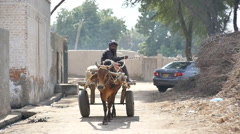 South Asian Farmer rides Cart pulled by Cow Stock Footage