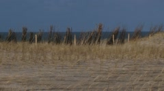 Marram grass and reed screens on dune crest catch the blowing sand Stock Footage