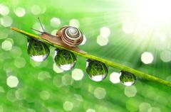 Stock Photo of Snail on dewy grass