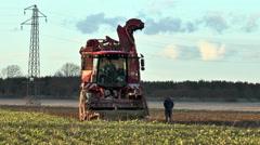 Sugar beet harvester - man walking alongside checking operation. Stock Footage