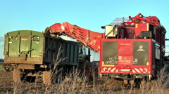 Sugar beet being transferred from stationary harvester to trailer. Stock Footage