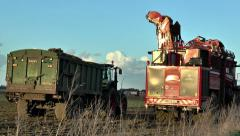 Sugar beet harvester fills trailer and moves off. Stock Footage