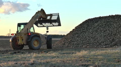 Earth mover extends bucket at top of sugar beet pile. Stock Footage