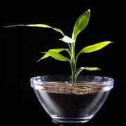 miniature tree in pot - stock photo