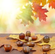Autumn leaves with oak acorns Stock Photos