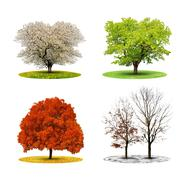 Tree in four season  Stock Photos