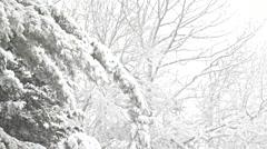 Snow laden fir tree boughs Stock Footage