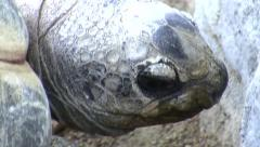 LA Zoo tortoise and shell close-up Stock Footage