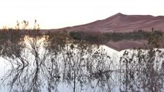 Vegetation in a desert lake before the sunrise Stock Footage