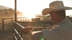 Cattle and Cowboy - stock footage
