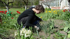 Woman with gloves carefully weeding spring tulip flowers bed Stock Footage