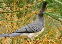 Go-away-bird sitting on the twig, Ethiopia, Africa - stock photo