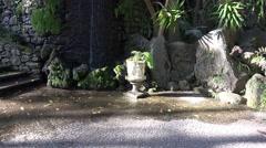 4k Tropic garden corner zoom decorative vase and fern Stock Footage