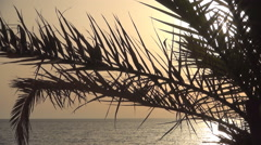 Sunset red skyline, Ionian island seashore, calm sea waves, palm tree. Stock Footage