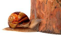 Pine tree and snail Kuvituskuvat