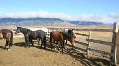 Horses in paddock of Patagonian farmland Stock Footage