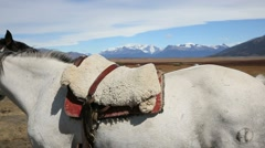 Closeup of horse saddle in Patagonian steppe, Argentina Stock Footage