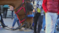 Rallenty footage of horse in the city center with people moving around Stock Footage