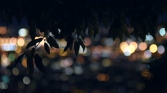 City lights and nature at night Stock Footage