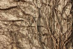 Concrete wall overgrown branches Stock Photos