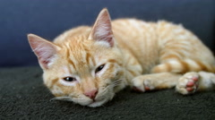 red tabby kitten on the couch - stock footage