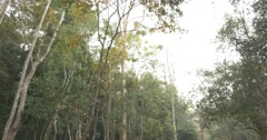 Forest Canopy Stock Footage