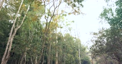 Forest Canopy In Nature Stock Footage