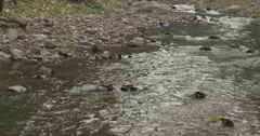 Calm River Flowing Through - stock footage