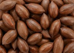 Pecan nuts background Stock Photos