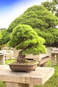 Bonsai in Humble Administrator's Garden, Suzhou, China - stock photo