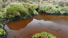 A pool of water in a bog high in the Andes, Ecuador Stock Footage