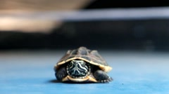 Turtle isolated Stock Footage