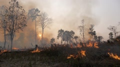 Burning land for the next harvest,Tad Lo,Laos Stock Footage