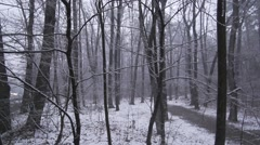 Winter landscape in the forest.Snowflakes fall in super slow motion Stock Footage