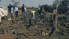 Kenya 1977: animal bones during a safari - stock footage