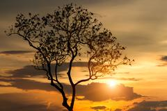 Beauty tree silhouette at sunset background Stock Photos