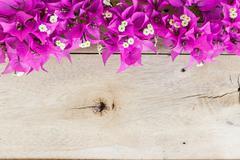 Bougainvillea flower on grain wood background Stock Photos